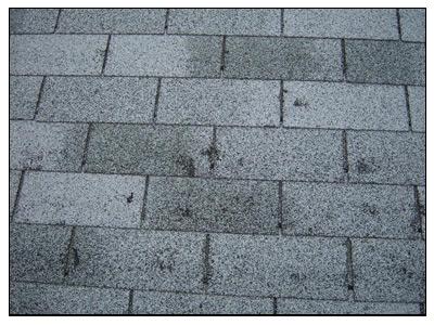 hail damage to shingle roof
